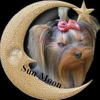 CHIENS : Yorkshire of Sun Moon
